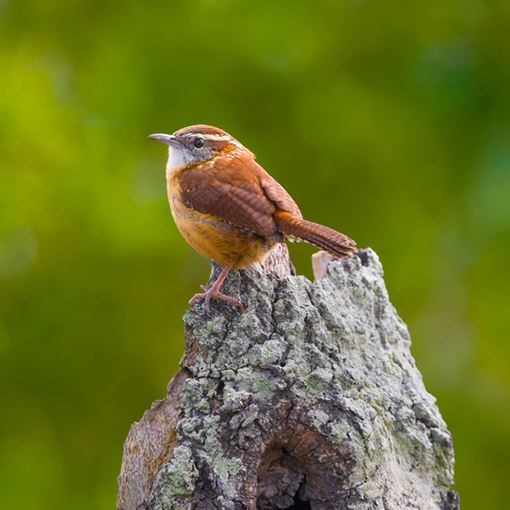Closeup of bird on a rock